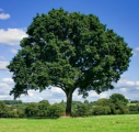 The Green Branch